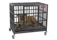 ProSelect Empire Color Cage for Pets Review