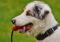 dog games for brain stimulating