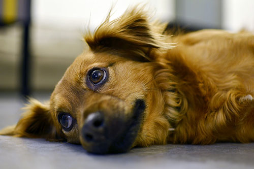 common health problems for dogs