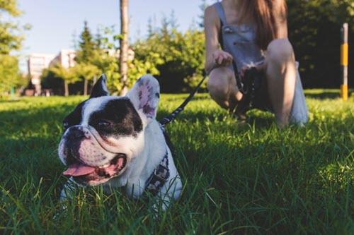 training dog secrets