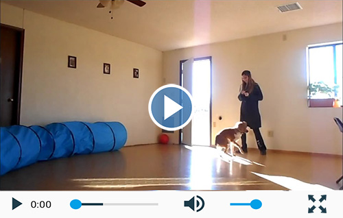 Choosing The Right Brain Training 4 Dogs Obedience Training Commands
