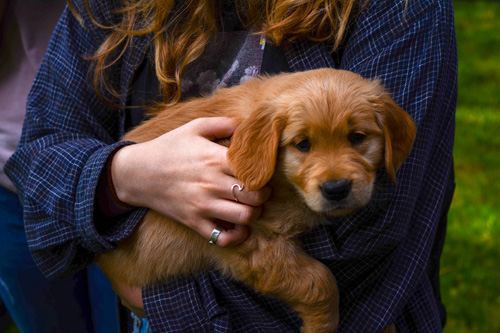 when and how to train puppies