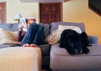 adopt dog in apartment