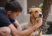 rehabilitating a dog