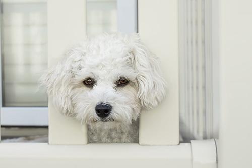 dog loneliness